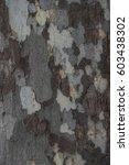 Small photo of Closeup, American Sycamore bark