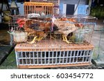 Live Chickens At The Wet Market