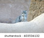 Cat On An Adobe Wall