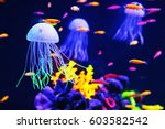 Beautiful Colorful Jellyfish I...