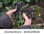 hands holding winter purple... | Shutterstock . vector #603624818