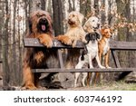 Stock photo group dogs on seat in the park 603746192