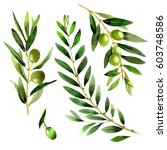 olive tree in a watercolor... | Shutterstock . vector #603748586