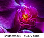 fine art detailed fiery glowing ... | Shutterstock . vector #603775886