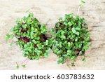 radish cress on wooden table ... | Shutterstock . vector #603783632