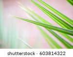 palm tree leaves and brick... | Shutterstock . vector #603814322