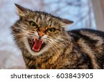 Stock photo a ferocious evil cat on the windowsill on the street the cat looks maliciously incredulously an 603843905