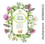 vector healing herbs vertical... | Shutterstock .eps vector #603860612