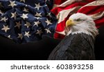 North American Bald Eagle With...