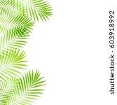 summer tropical palm tree... | Shutterstock .eps vector #603918992