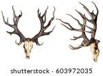 schomburgk's deer head skull... | Shutterstock . vector #603972035