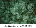 Fir Tree  Background For...