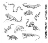 vector collection of reptiles.... | Shutterstock .eps vector #604000508