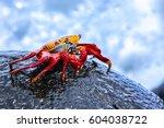 Sally Lightfoot Crab On A Lava...
