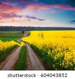 Colorful Summer Sunset In A...