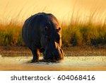wild africa. african... | Shutterstock . vector #604068416