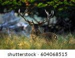 deer  majestic powerful adult... | Shutterstock . vector #604068515