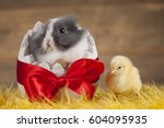 Easter Chicken  Bunny