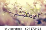 blossomings of an apple tree in ... | Shutterstock . vector #604173416
