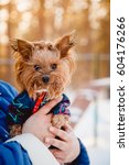 puppy yorkshire terrier  team... | Shutterstock . vector #604176266