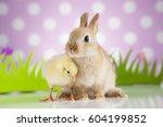 easter chicken  bunny | Shutterstock . vector #604199852