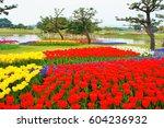 tulip of uminonakamichi seaside ... | Shutterstock . vector #604236932