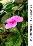 beautiful pink flower | Shutterstock . vector #604252496