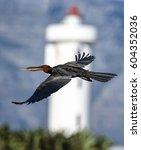 Small photo of African darter flying past a lighthouse
