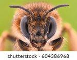 Extreme Magnification   Honey...