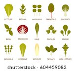 green salad leaves isolated on... | Shutterstock .eps vector #604459082