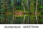 green summer forest at the... | Shutterstock . vector #604575446
