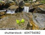 beautiful nature  wet rock and... | Shutterstock . vector #604756082
