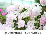 Beautiful White And Pink ...