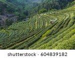 tea plantation landscape | Shutterstock . vector #604839182