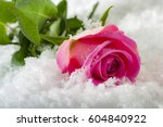 Small photo of Love will endure forever - frozen winter pink rose covered in snow and frost laying on the ground surrounded by ice crystals and water drops, a sign of unflattering lasting passion with full frame