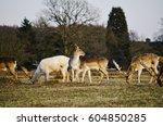 deer | Shutterstock . vector #604850285