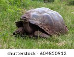 Galapagos Giant Tortoise In...