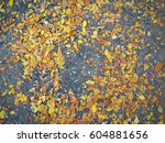 leaves are so dry | Shutterstock . vector #604881656