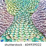 peacock feathers | Shutterstock . vector #604939022