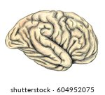 human brain side view  hand... | Shutterstock . vector #604952075
