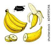 banana set vector drawing.... | Shutterstock .eps vector #604959146