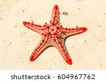 Red Knobbed Sea Star ...