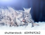 Head Of A Gray Cat Sleeping On...