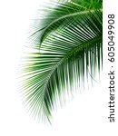 Tropical Coconut Palm Leaves...
