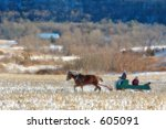 Horse Drawn Sleigh In The...