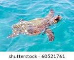 The Loggerhead Sea Turtle ...