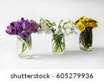 Violet Saffron Crocus Flower...