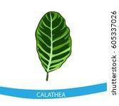 calathea leaf  | Shutterstock . vector #605337026