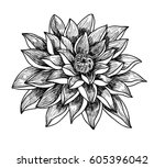 hand drawn and sketch lotus... | Shutterstock .eps vector #605396042