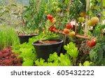 fresh tomato and lettuce in... | Shutterstock . vector #605432222